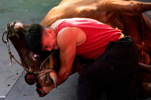 Кунг-фу с быками