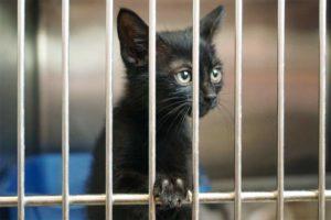домашних животных не смогут забрать судебные приставы