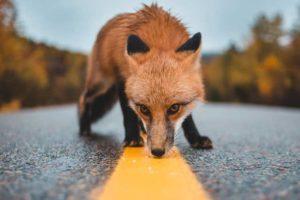 защитой диких животных